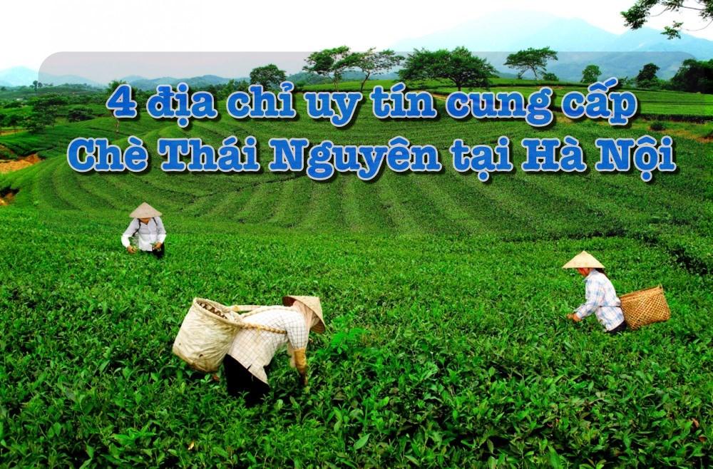 4 địa chỉ uy tín cung cấp chè Thái Nguyên ngon ở Hà Nội